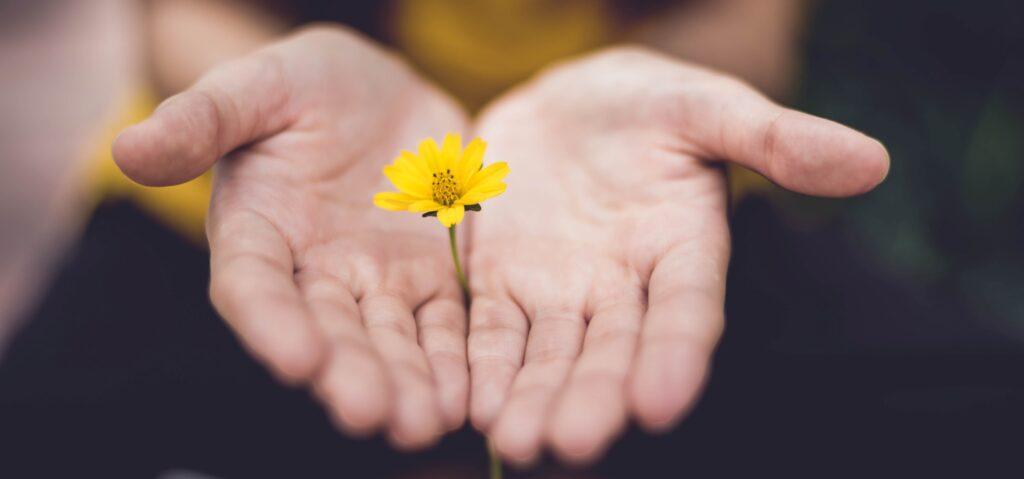 Billede af to hænder som holder en gul blomst